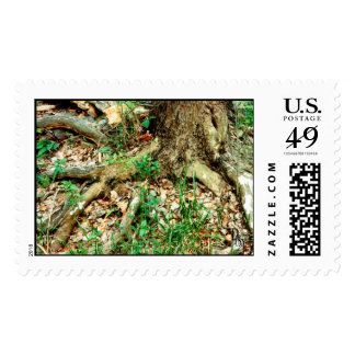 Deep Rooted Postage Stamps