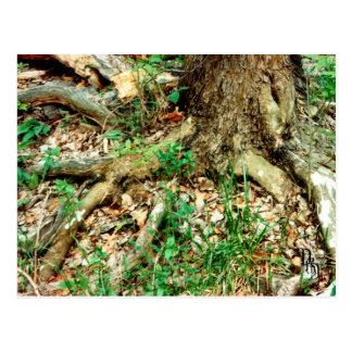 Deep Rooted Postcard