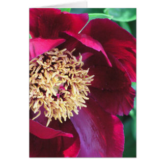 """DEEP-ROSE COLORED PEONY"" NOTECARD/PHOTOG./BLANK CARD"