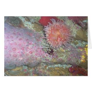 Deep sea treasure card