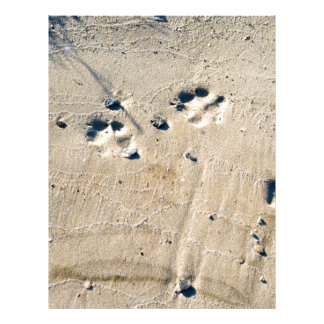 Deep traces of a large dog on the sand letterhead