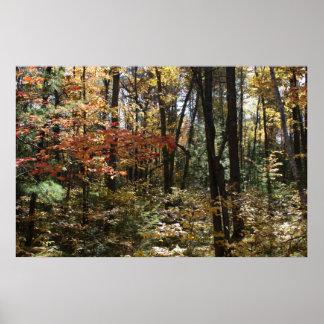 Deep Woods Beauty Poster