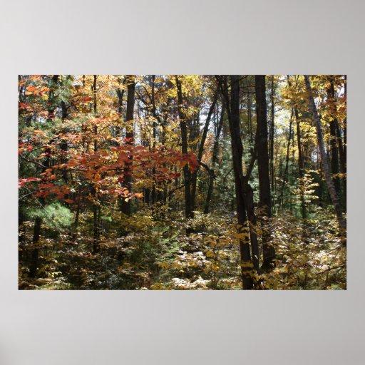 Deep Woods Beauty Print