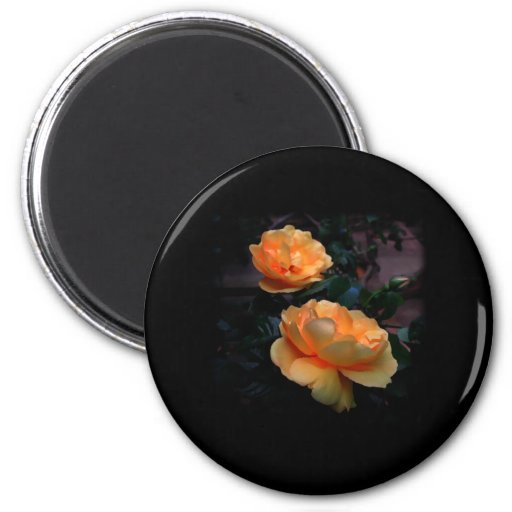 Deep Yellow - Orange Roses, on Black. Custom Fridge Magnets