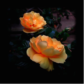 Deep Yellow - Orange Roses, on Black. Custom Photo Cut Out