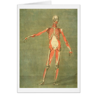 Deeper Muscular System of the Front of the Body, p Card