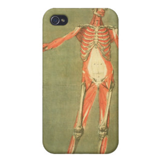 Deeper Muscular System of the Front of the Body, p iPhone 4 Cover