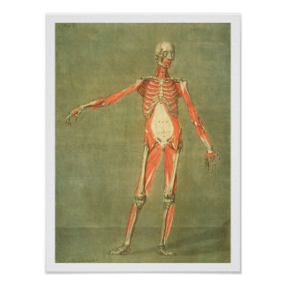 Deeper Muscular System of the Front of the Body, p Poster