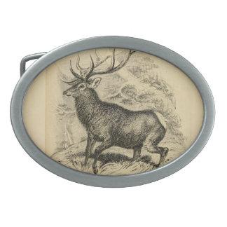 Deer (1849) oval belt buckles