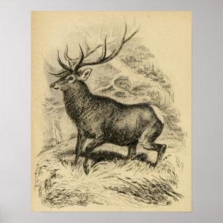 Deer (1849) print