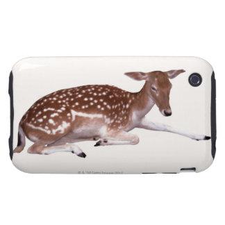 deer 2 iPhone 3 tough cases