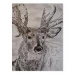 deer 2 postcard