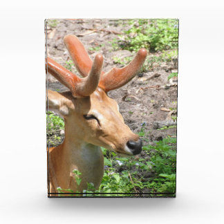 deer-51.jpg