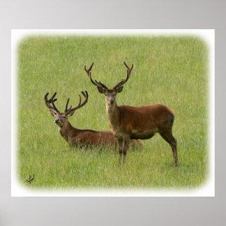 Deer 9Y413D-023 Poster