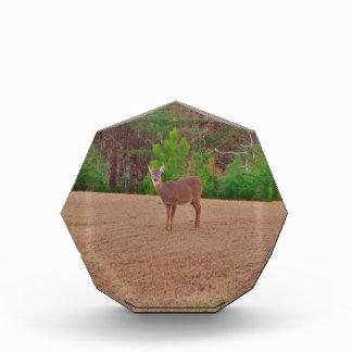 Deer A Doe in the Winter Grass Acrylic Award