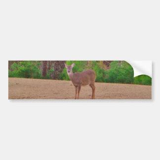 Deer A Doe in the Winter Grass Bumper Sticker