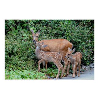Deer and Fawns Posters