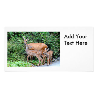 Deer and Twin Fawns Animal Family Card