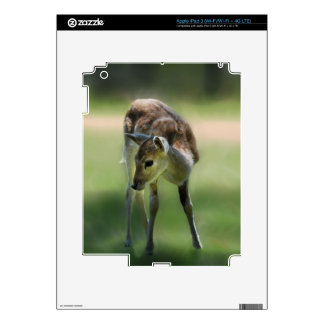 Deer are so sweet decals for iPad 3