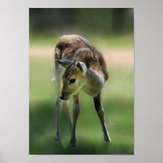 Deer are so sweet poster