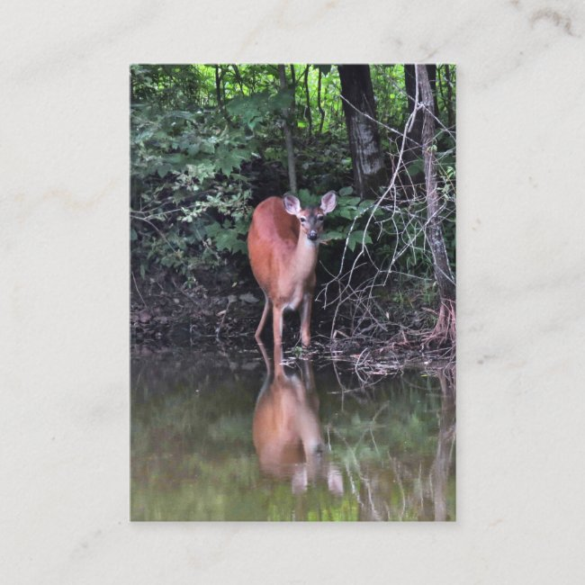 Deer at Forest Pond ATC