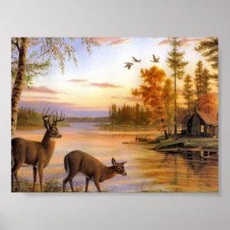 Deer At Lake Posters