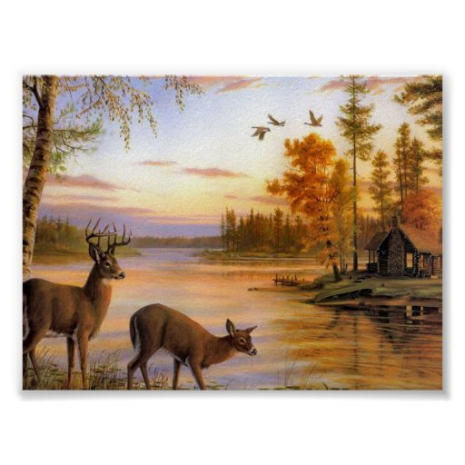 Deer At Lake Posters