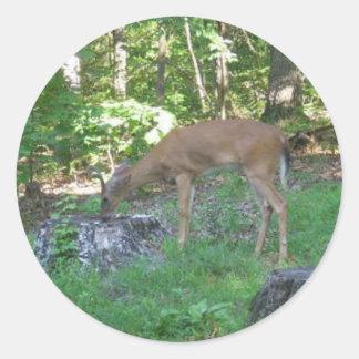 Deer At Stump Glossy Round Sticker