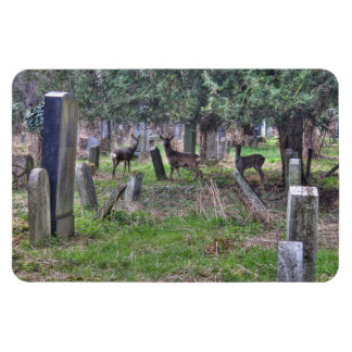 Deer At Zentralfriedhof Magnet