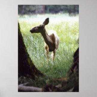 deer between trees print