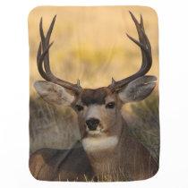 deer buck baby blanket