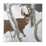 Deer Buck in Snow Ceramic Tiles