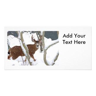 Deer Buck in Snow in Winter Card