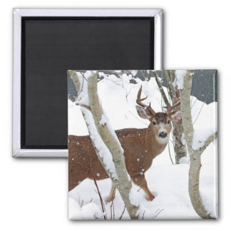 Deer Buck in Snow in Winter Magnet