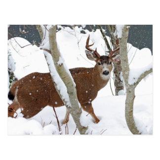 Deer Buck in Snow in Winter Postcard
