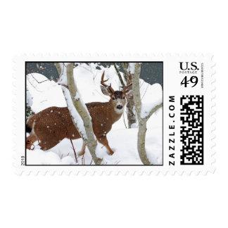 Deer Buck in Snow in Winter Stamp