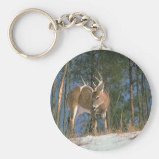 Deer Buck Keychain