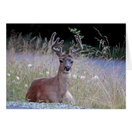 Deer Buck Lying Down Card