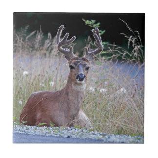 Deer Buck Lying Down Ceramic Tile