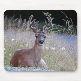 Deer Buck Lying Down Mousepad