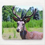Deer (BUCK) Mouse Pad
