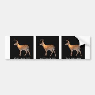 Deer (Buck) White-Tailed Bumper Sticker