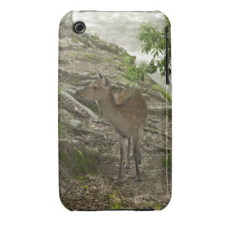 Deer iPhone 3 Cover