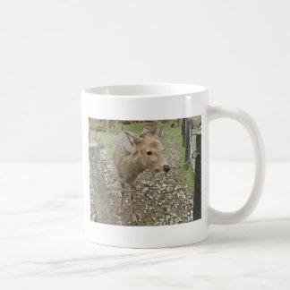 Deer chewing a chain coffee mug