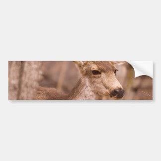 Deer Close-up 01 Bumper Sticker