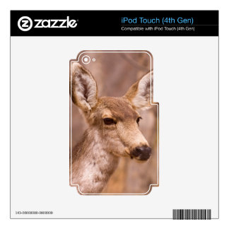 Deer Close-up 01 iPod Touch 4G Skin