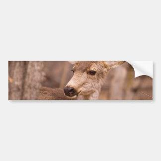 Deer Close-up 02 Bumper Sticker