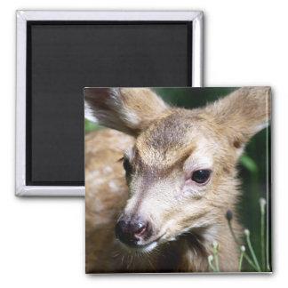 Deer Closeup 2 Inch Square Magnet