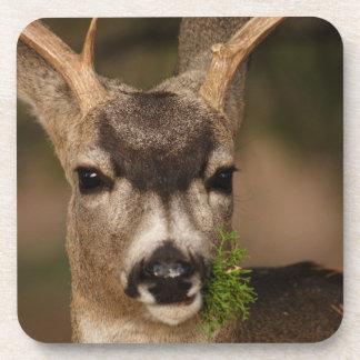 deer beverage coaster