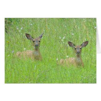 Deer & Daisies Card